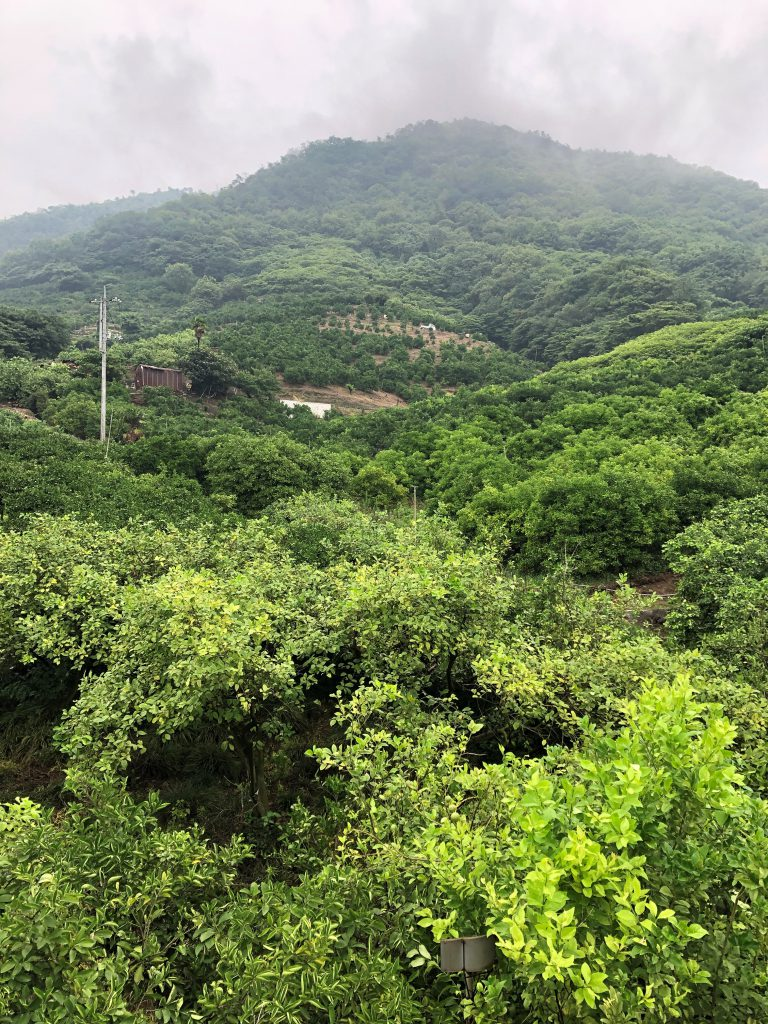 Lots of trees and greenery, a mountain in the fog