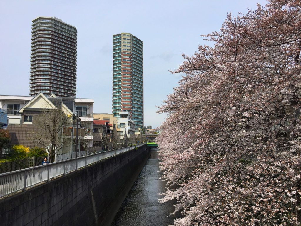 A view of Tokyo: apartment buildings, a river and cherry blossoms