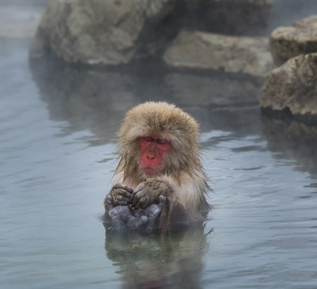 A snow monkey relaxing in a natural hot spring.