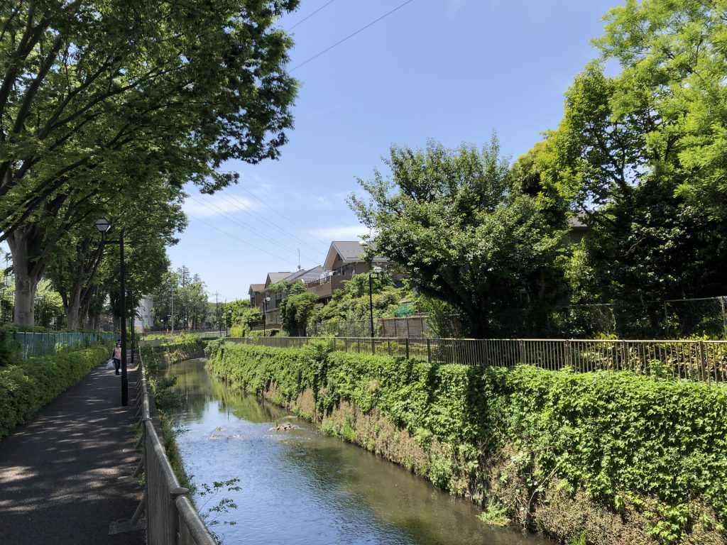 Picture of the Kanda river, along which there is a lot of green