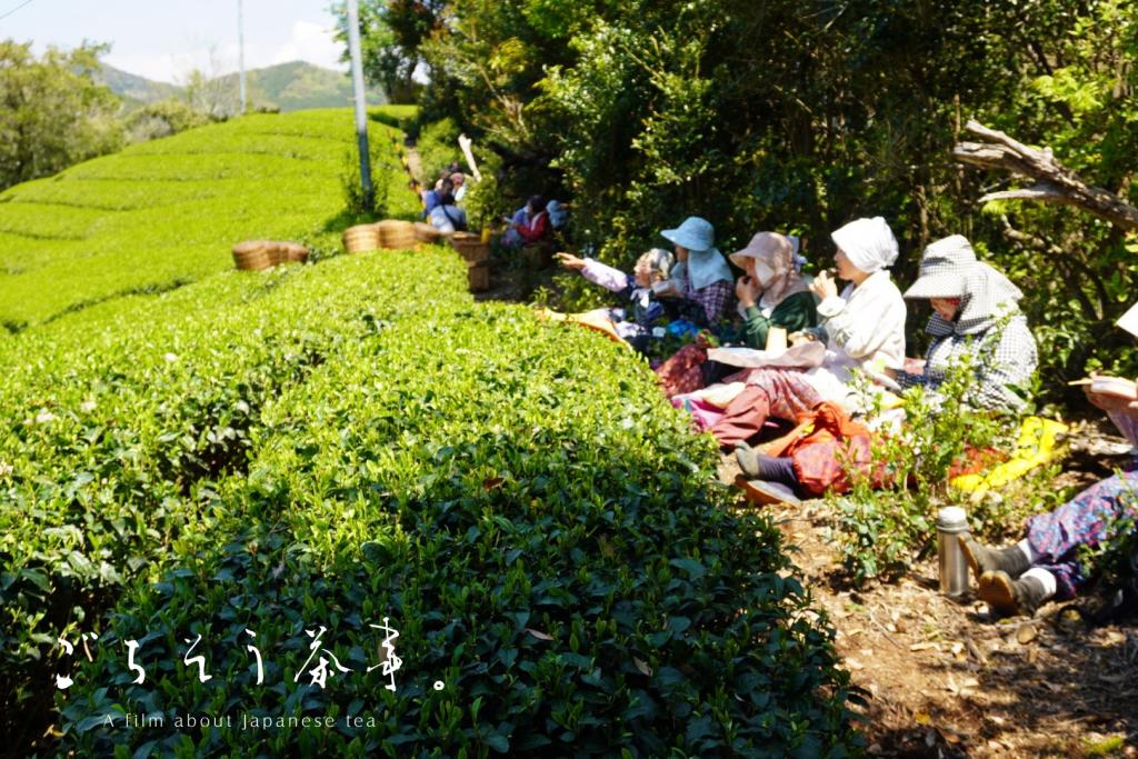Tea harvesting women have a lunch break next to tea fields